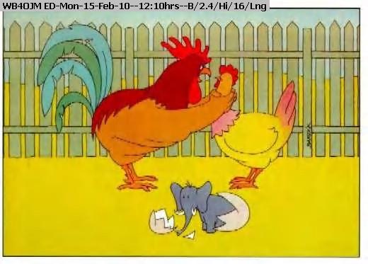 060118121056-ChickenElephant.jpg