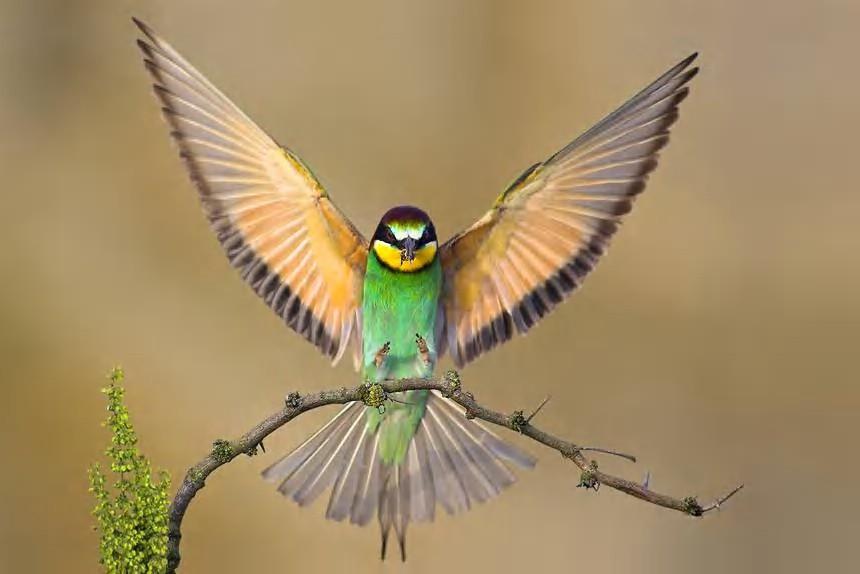 081029112642-bird1.jpg