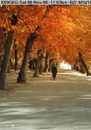 081108110039-Autumn In Helsinki.jpg