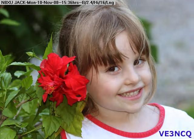 081110153456-IMG_1685-EmilyHibiscus.jpg