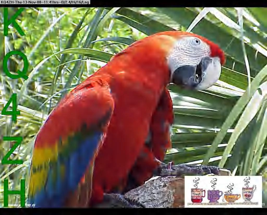 081113113926-parrot-wallpaper.jpg