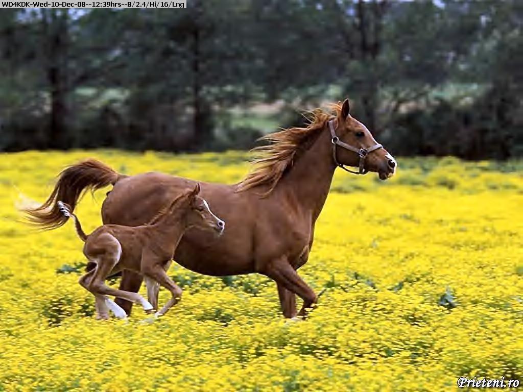 081210113645-mother horse.jpg
