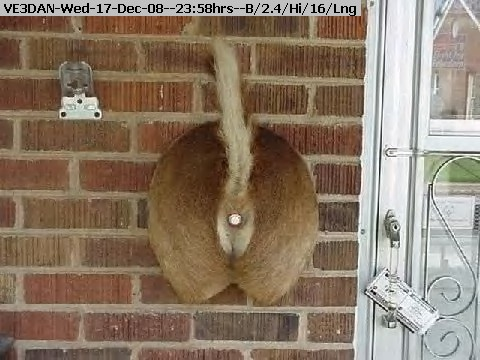 081217235732-r n doorbell.jpg