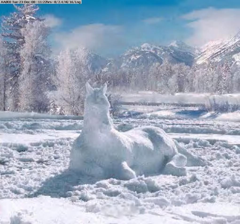 081223102143-horse.jpg