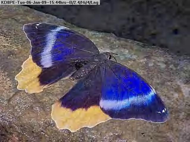 090106154317-Butterfly.jpg