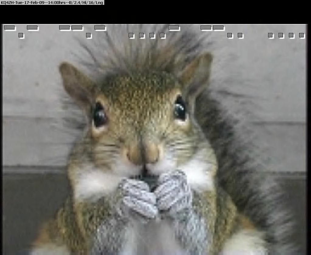 090217135822-nature22-squirrel.jpg