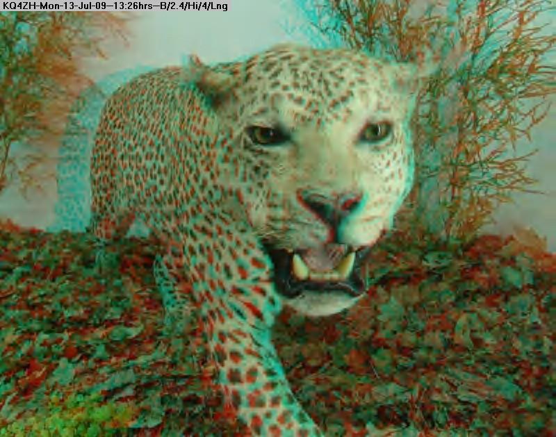 090713132228-3d---leopard.jpg