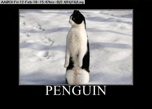 100212144437-Penguin.jpg