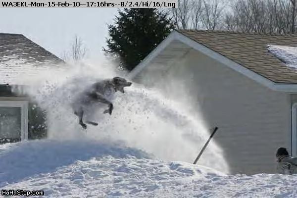 100215171355-Snowblower_Dog.jpg