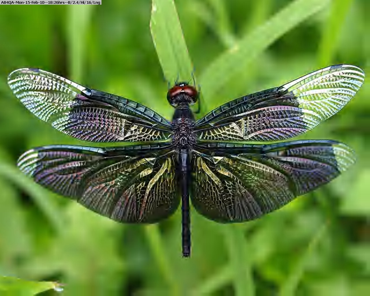 100215172319-Dragonfly_insect.jpg