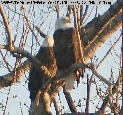 100215191446-WX2-8 Two Eagles.jpg