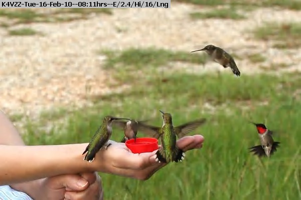 100216080822-Hummers-in-Hand-2.jpg