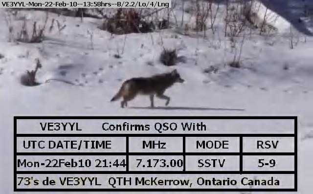 100222135234-wolf1.jpg