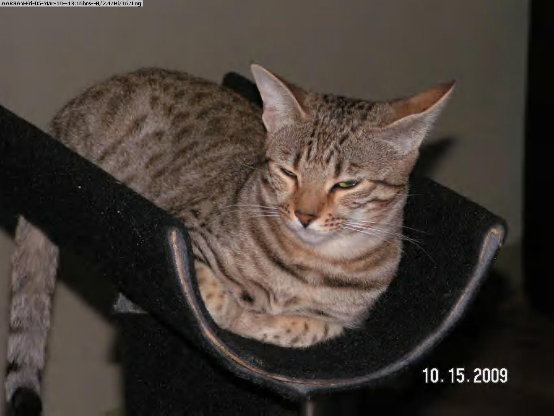 100305131353-Cats 2009-2010 010.jpg