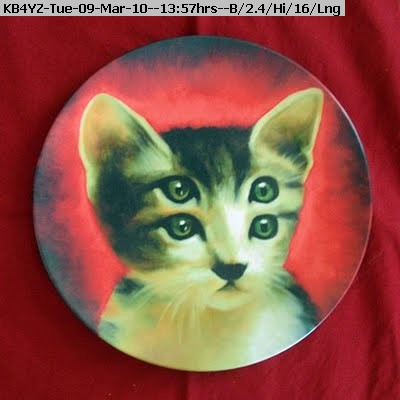 100309135418-cat.jpg