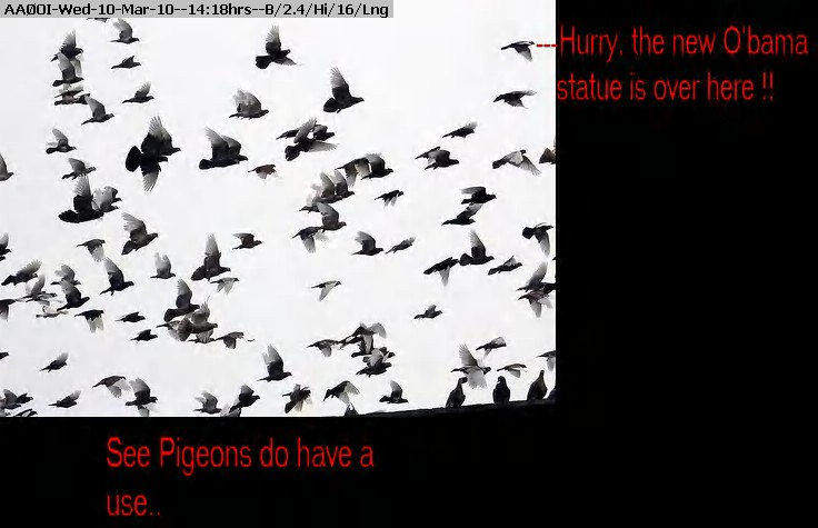 100310131453-flock_08_09.jpg