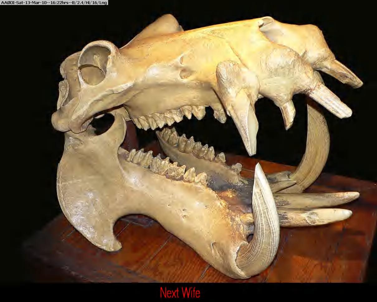 100313151903-Hippo_Skull_Dark.jpg
