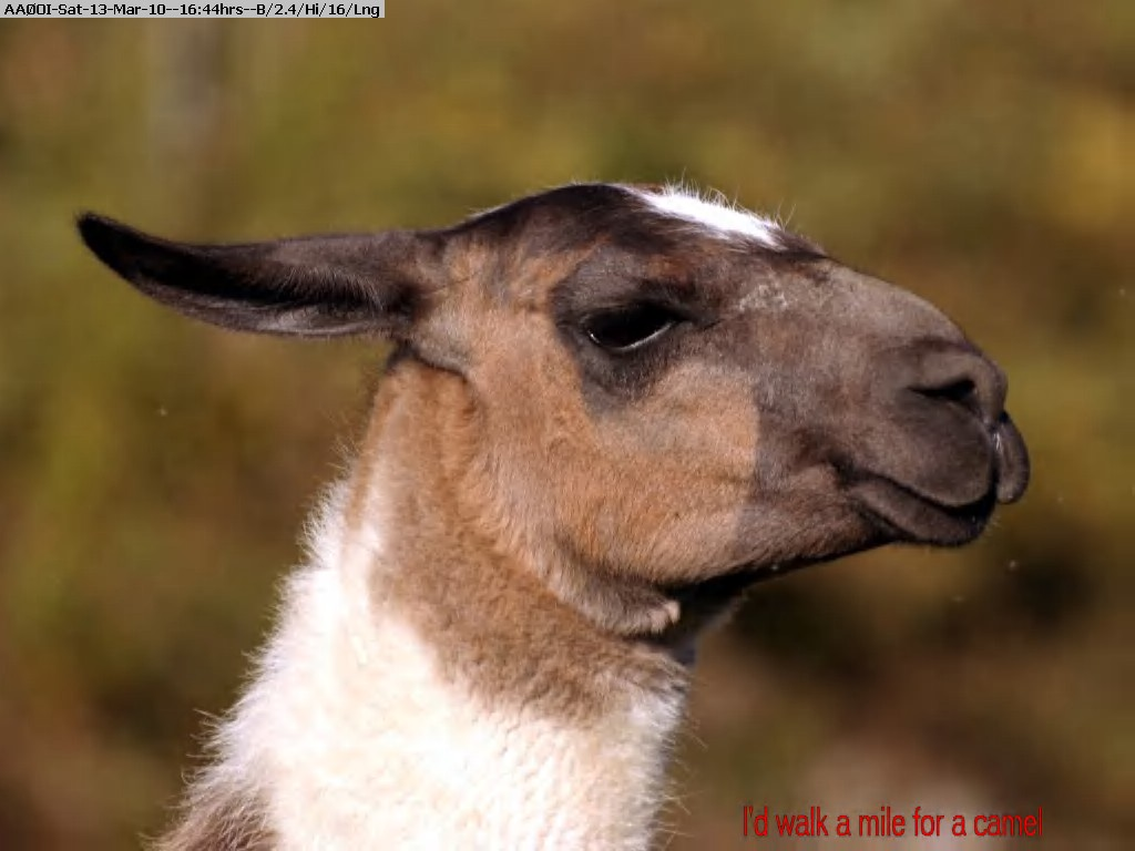 100313154106-vitalyf-llama.jpg