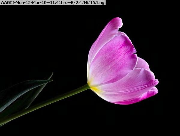 100315113916-20100315.jpg