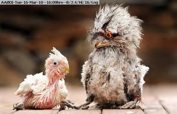 100316160504-chicks_1542093i.jpg