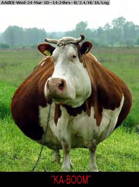 100324142228-fat_cow-1.jpg