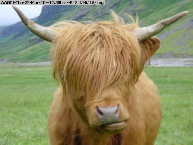 100325125703-Dsc00141_Closeup_of_Highland_Cow.jpg