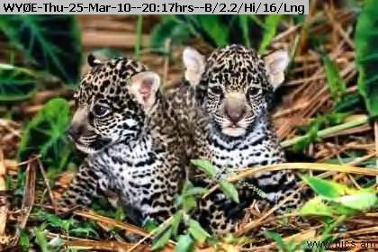 100325201535-www_pics_am-animals354.jpg