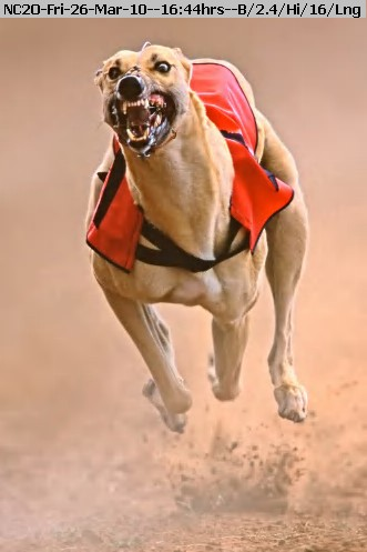 100326173923-greyhound.jpg