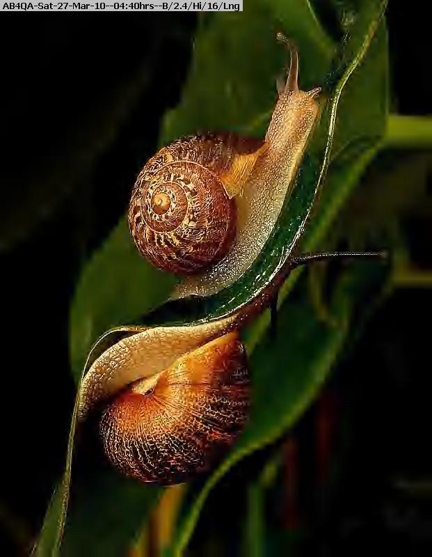 100327043908-snail.jpg