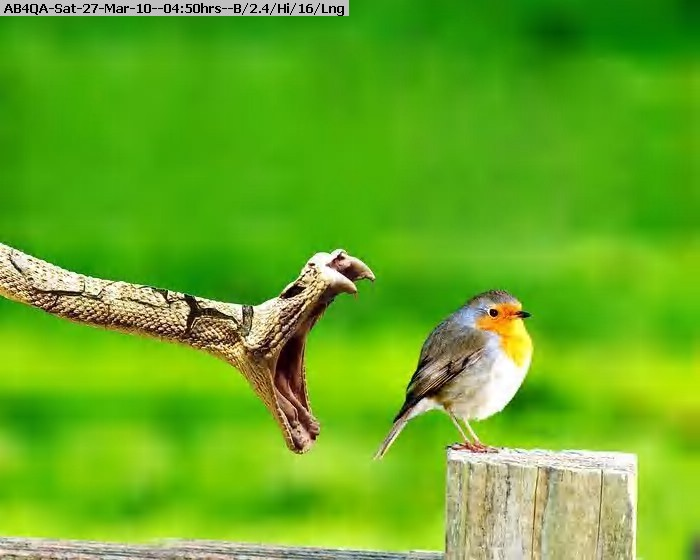 100327044843-bird.jpg