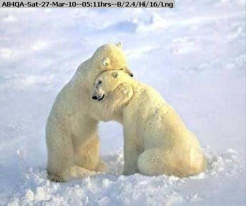 100327051008-polar.jpg
