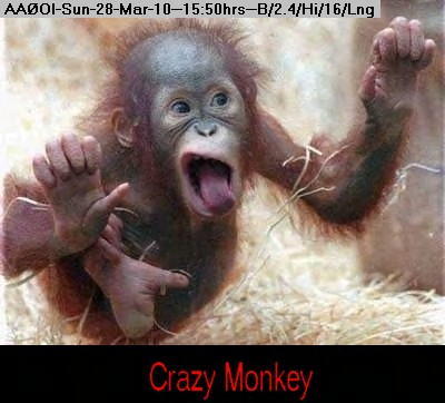 100328154824-CrazyMonkey.jpg