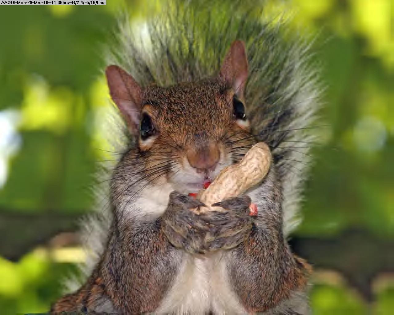 100329113425-Squirrel-Eating-nut.jpg