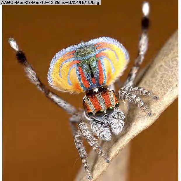100329122328-spider_1532396i.jpg