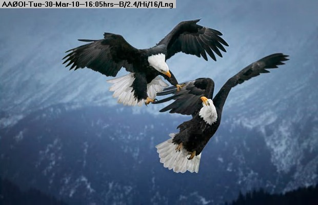 100330160351-eagles_1536321i.jpg