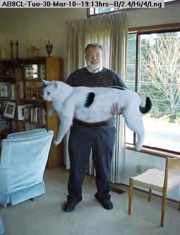 100330201158snowball-fake-giant-cat.jpg