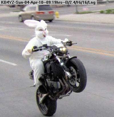 100404101748-easter-bunny-motorcycle.jpg