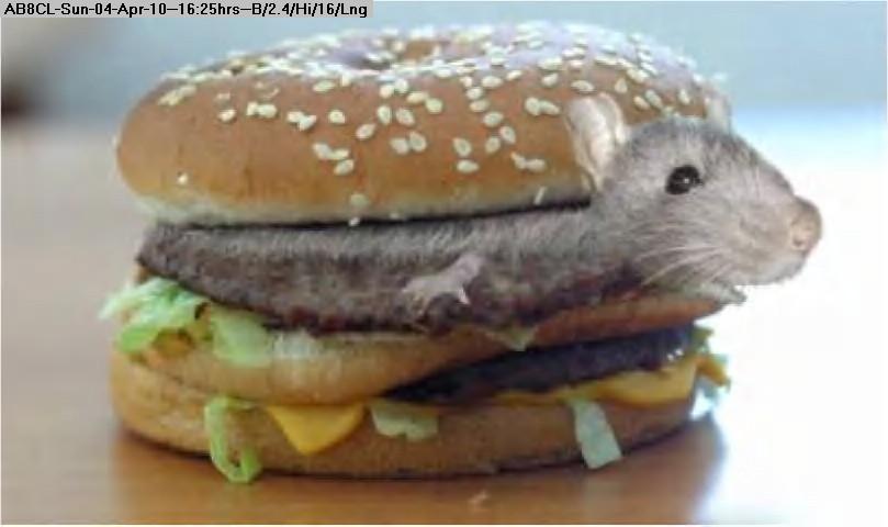 100404172418-mouse_hamburger.jpg