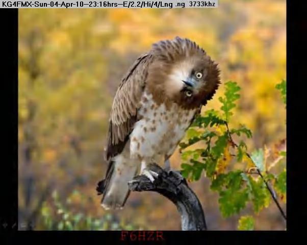 100405001134-owl.jpg