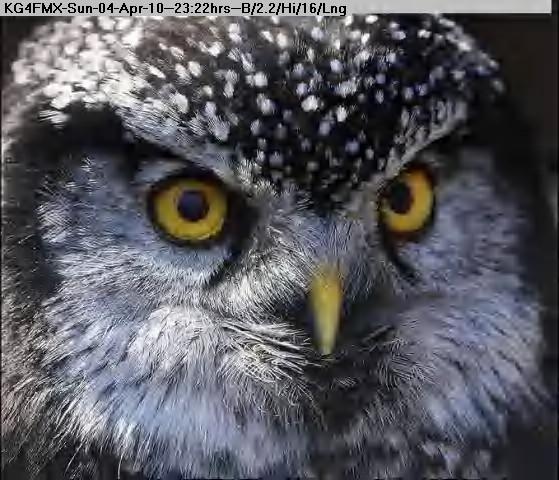 100405002029-owl-1.jpg