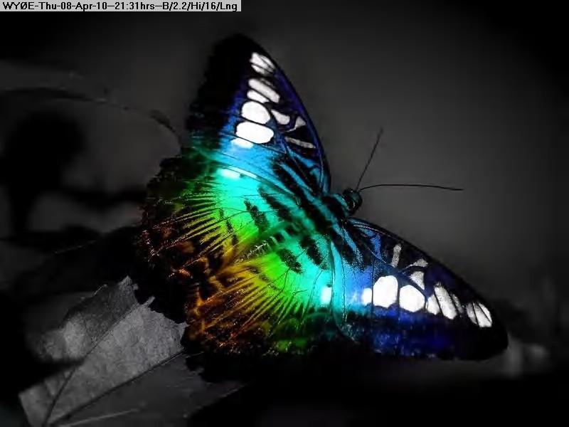 100408202940-animal_0047_lightbox.jpg