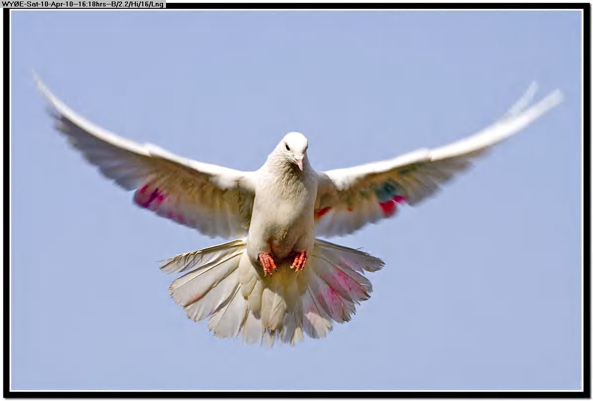 100410151631free-pictures-birlanding-nature-AHMED-Busy.jpg