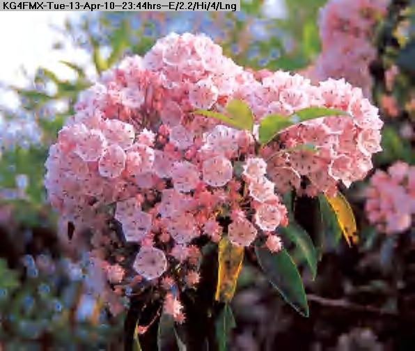 100413234113-flowers203.jpg