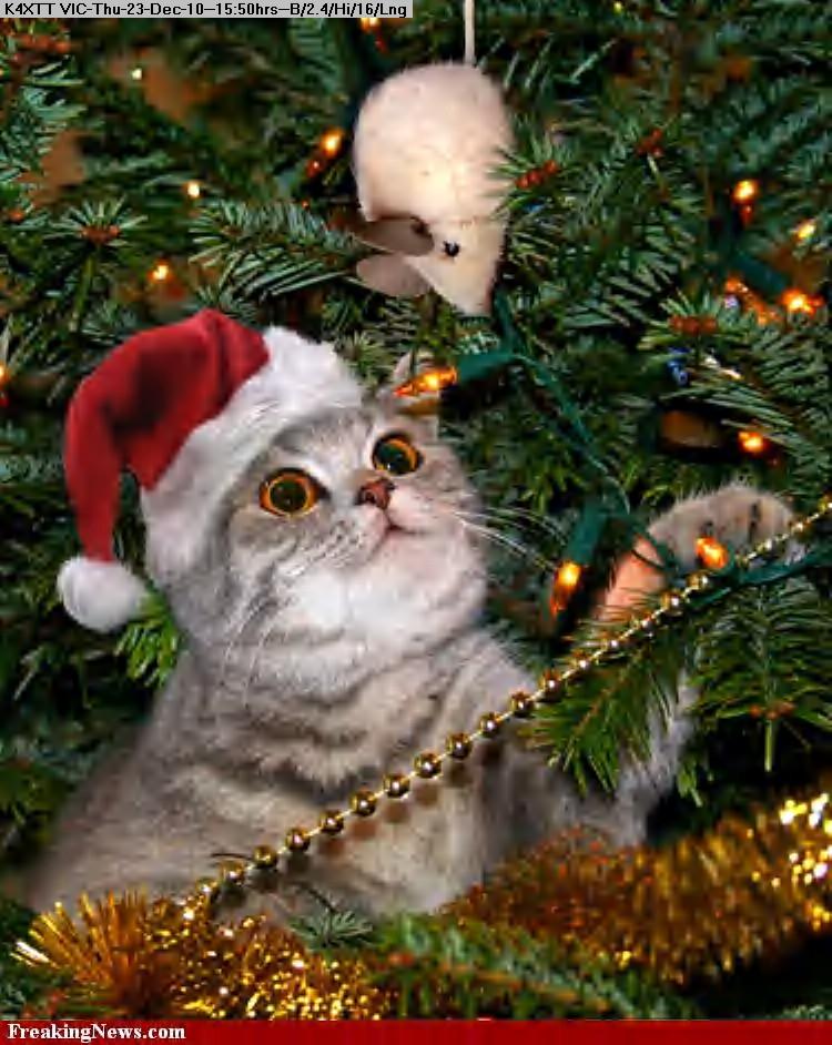 101223154814Cat-Christmas--34647.jpg